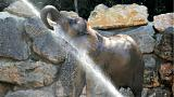 Estanque para elefantes en el Zoo de Viena