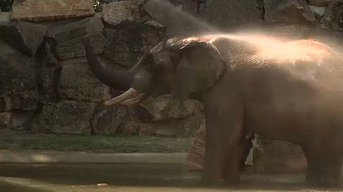 Fürdő az elefántoknak