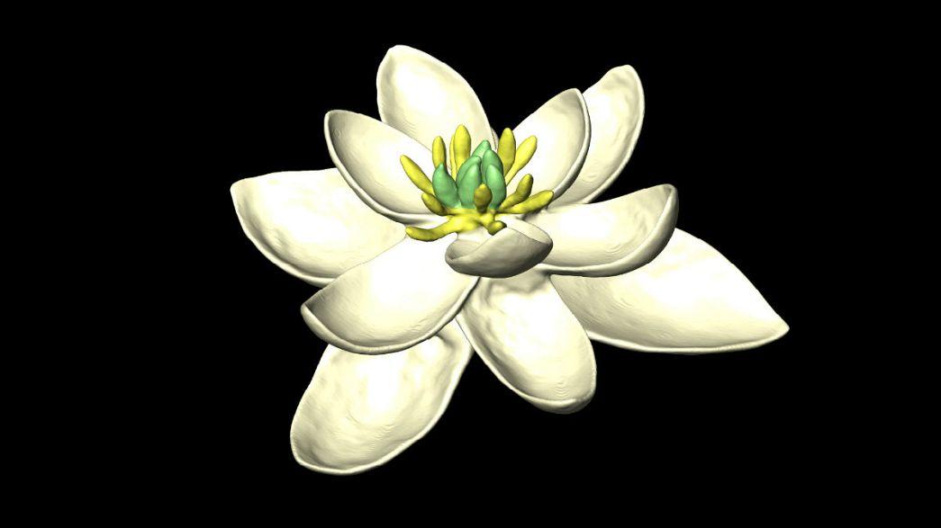Így nézhetett ki az első virág
