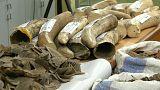 حجز شحنتين من العاج المهرب في مطار كوالالمبور