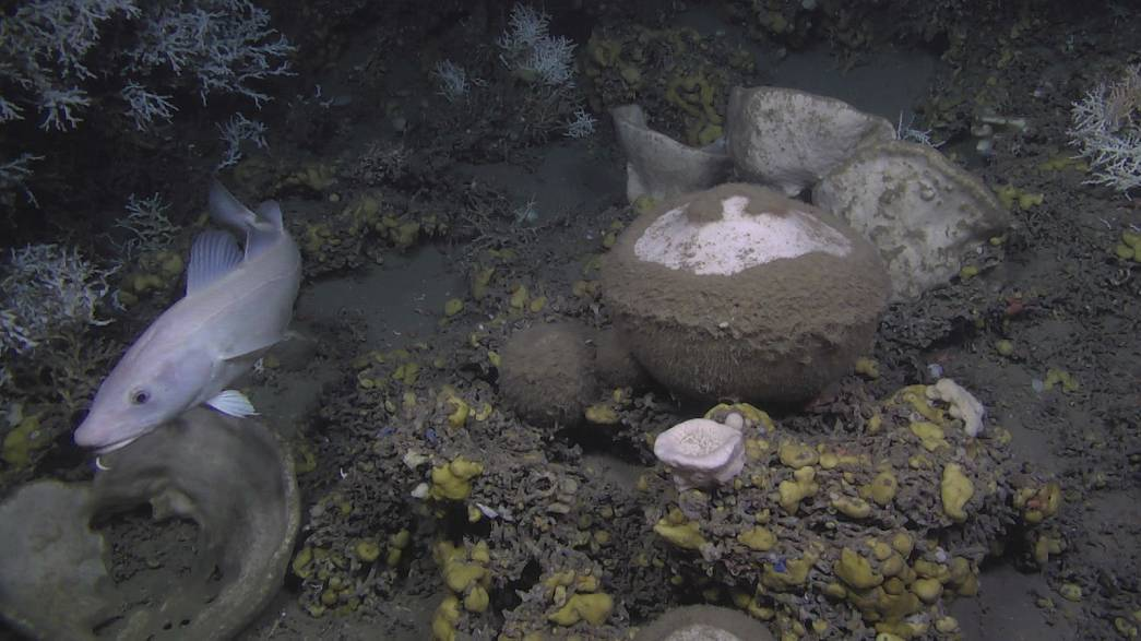 Scientists absorbed by deep-sea sponges
