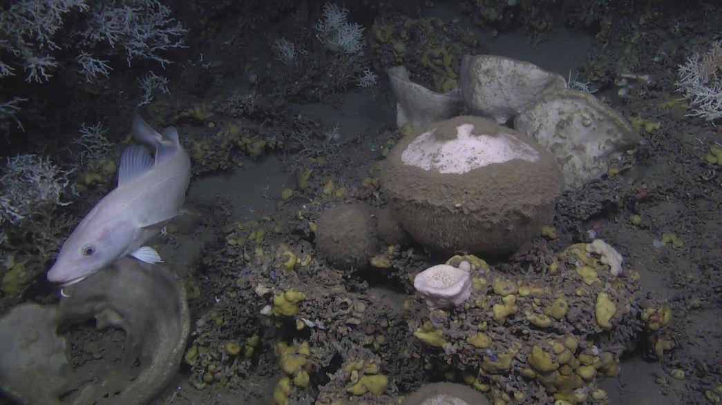 Mélytengeri szivacsokkal az egészséges óceánokért