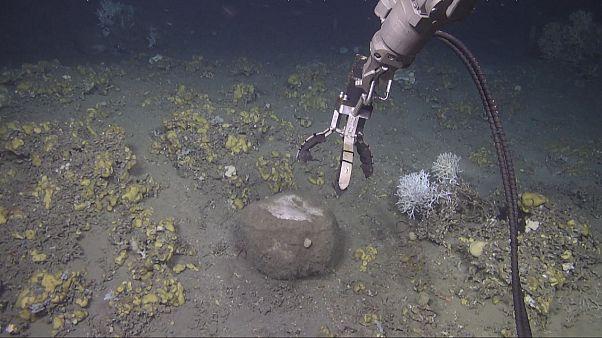 Takeaway: Filters of the ocean
