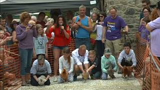 İngiltere'de Dünya Tavuk Yarış Şampiyonası düzenlenendi