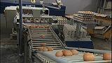 Allarme uova contaminate esteso in Europa, forse anche in Italia