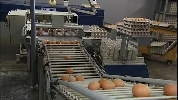 Tainted eggs found in France