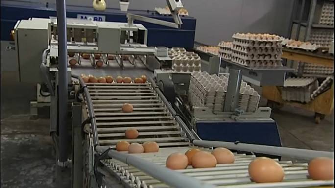 Crise dos ovos contaminados estende-se ao Reino Unido e França