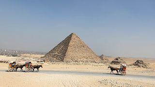 مصر: استئناف تصدير الخيول العربية  الأصيلة  إلى دول الإتحاد الأوربي