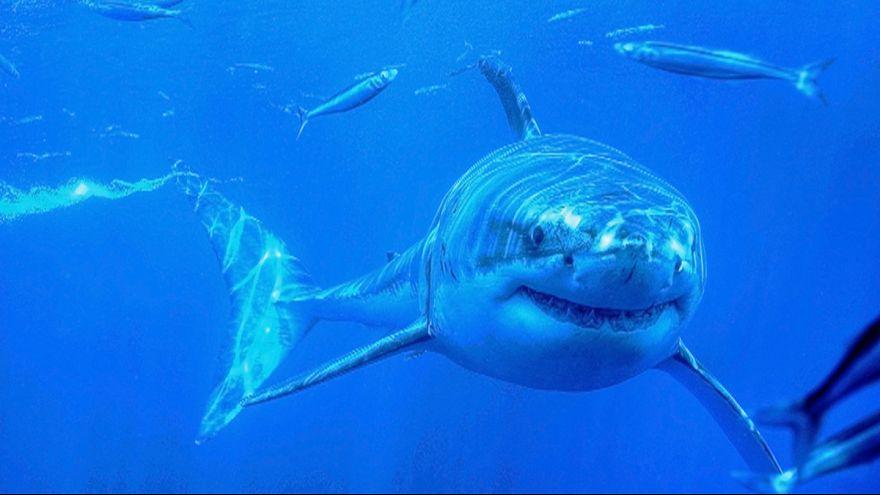 """الحكومة المصرية تعلق على """"هجوم القرش"""""""