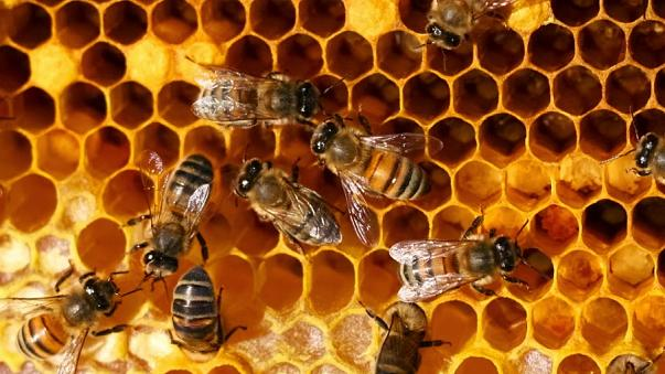 Hitzewelle belastet Italiens Bienenvölker