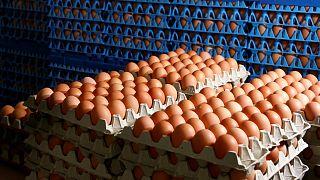 «Μπαλάκι ευθυνών» για το σκάνδαλο με τα αβγά