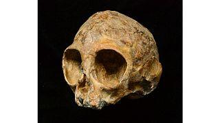 جمجمة قرد صغير منقرض تضيء حقائق عن أسلاف البشر والقرود