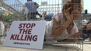 Güney Kore'de köpek eti protestosu