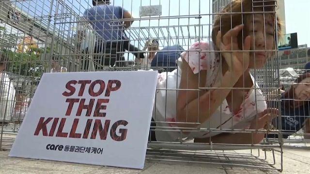 شاهد: بشر في اقفاص احتجاجا على أكل لحوم الكلاب