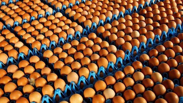 15 países da UE com ovos tóxicos