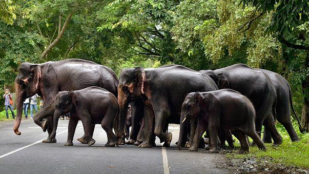 Elefant trampelt Jungen (12) zu Tode