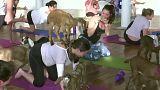 Faire du yoga avec une chèvre : une activité parmi d'autres, aux États-Unis