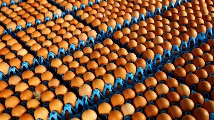فضيحة البيض الملوث تتجاوز حدود أوروبا وتمتد إلى آسيا