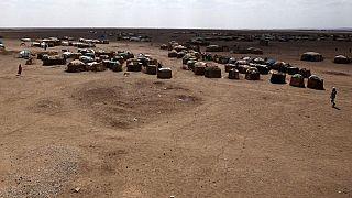 """FAO pede """"ajuda urgente"""" para criadores de gado afetados pela seca"""