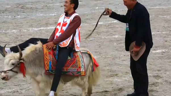 Horse festival in Tibet brings high jinks and high notes to the high plateaux