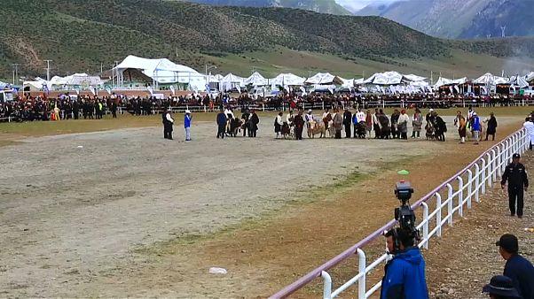 Tibetan yak racing