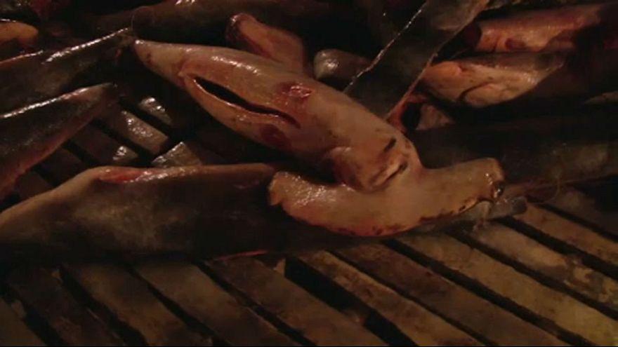 Cápatetemeket csempésztek a Galápagos-szigeteknél