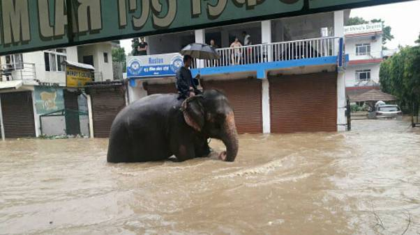 Man turns to elephant to get around flood-hit Nepal