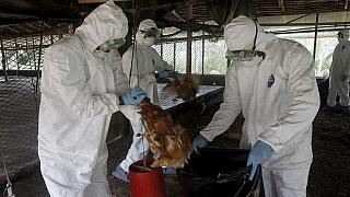 Bird flu spreads in South Africa's Western Cape province