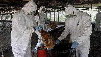 Afrique du Sud : la grippe aviaire détectée dans le Cap occidental
