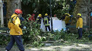 Madeira: vizsgálat és gyász