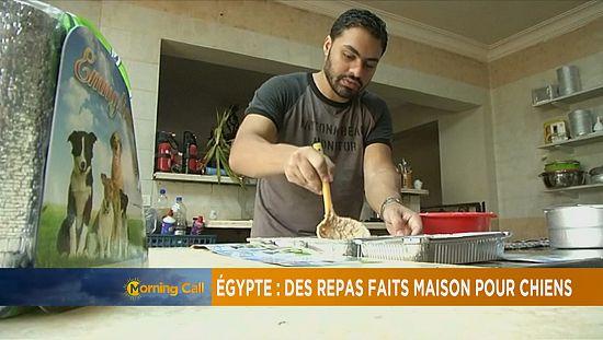 Egypte: des repas faits maison pour chiens
