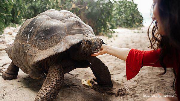 Eco-Tourism: Preserving the Seychelles' true treasures