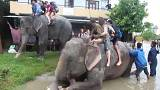 Elephants rescue tourists in flood-hit Nepal