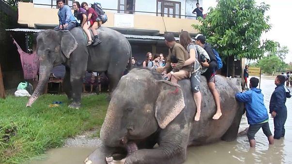 Elephants rescue tourists in flood-hit Nepal