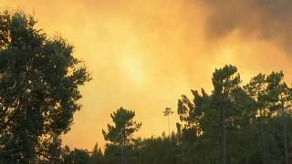 European commission to provide €45 million to tackle Portugal forest fires