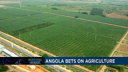L'Angola mise sur l'agriculture et les investissements du Maroc en Afrique subsaharienne [Business Africa]