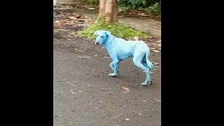 Something in the water - and it's turning dogs blue
