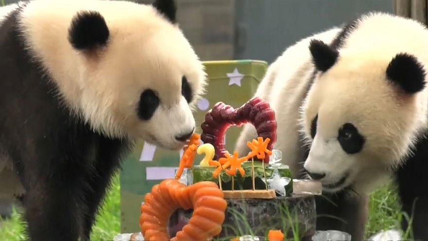 Double the fun at twin pandas' birthday bash