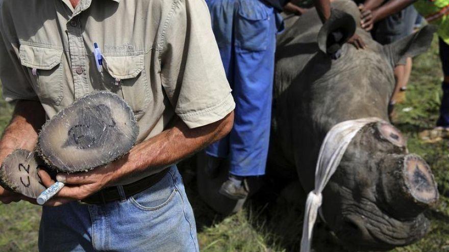 Autorizado leilão de chifres de rinoceronte na internet