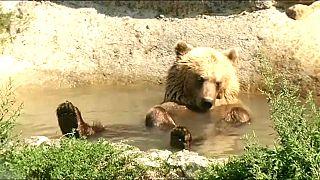 Ukraine: Ein neues Zuhause für Braunbären