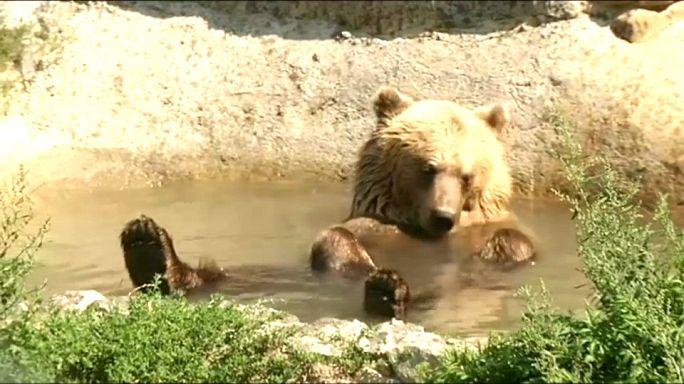 Долгожданный отдых для цирковых медведей