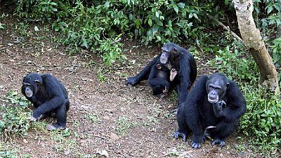 Second Sierra Leone landslide threatens famous chimpanzee sanctuary