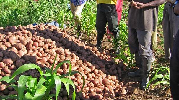 Angola seeks to roll back oil dependency to diversify economy through agriculture