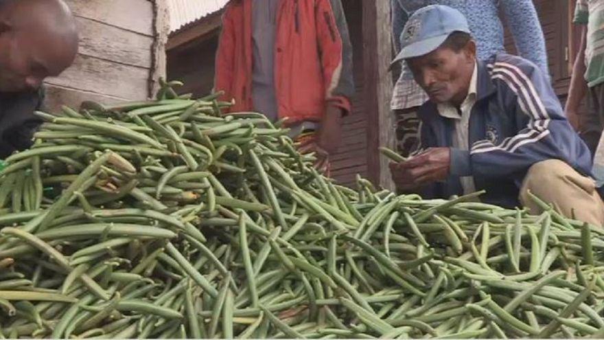 Vanilla prices soar in Madagascar