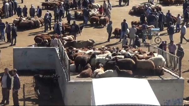 Kurban bayramına sayılı günler kala hayvan pazarları hareketlendi