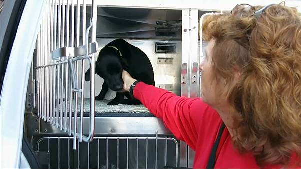 Doomed dogs start new life in USA