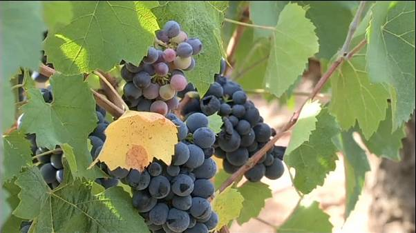 France : la production de vin en baisse, mais un millésime exceptionnel
