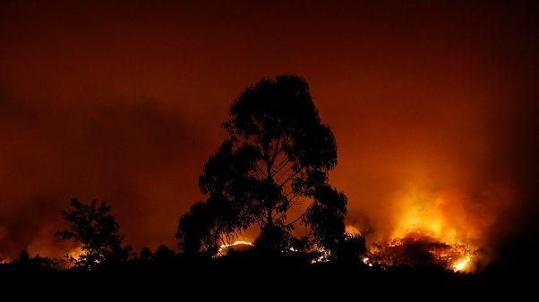 Quase 1200 operacionais combatem fogos em Bragança e Castelo Branco