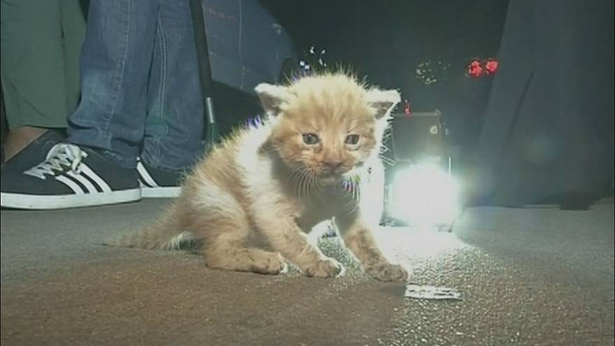 Kitten trapped in car saved in Qinhuangdao, China