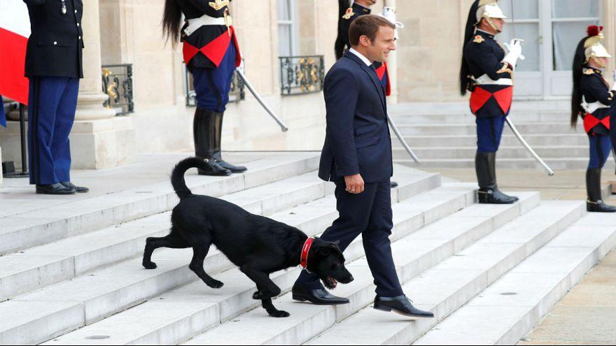 """""""نيمو"""" كلب ماكرون الأول في الإليزيه"""